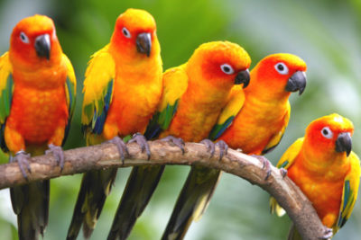 Der Jurong Bird Park in Singapur Copyright by Singapore Tourism Board